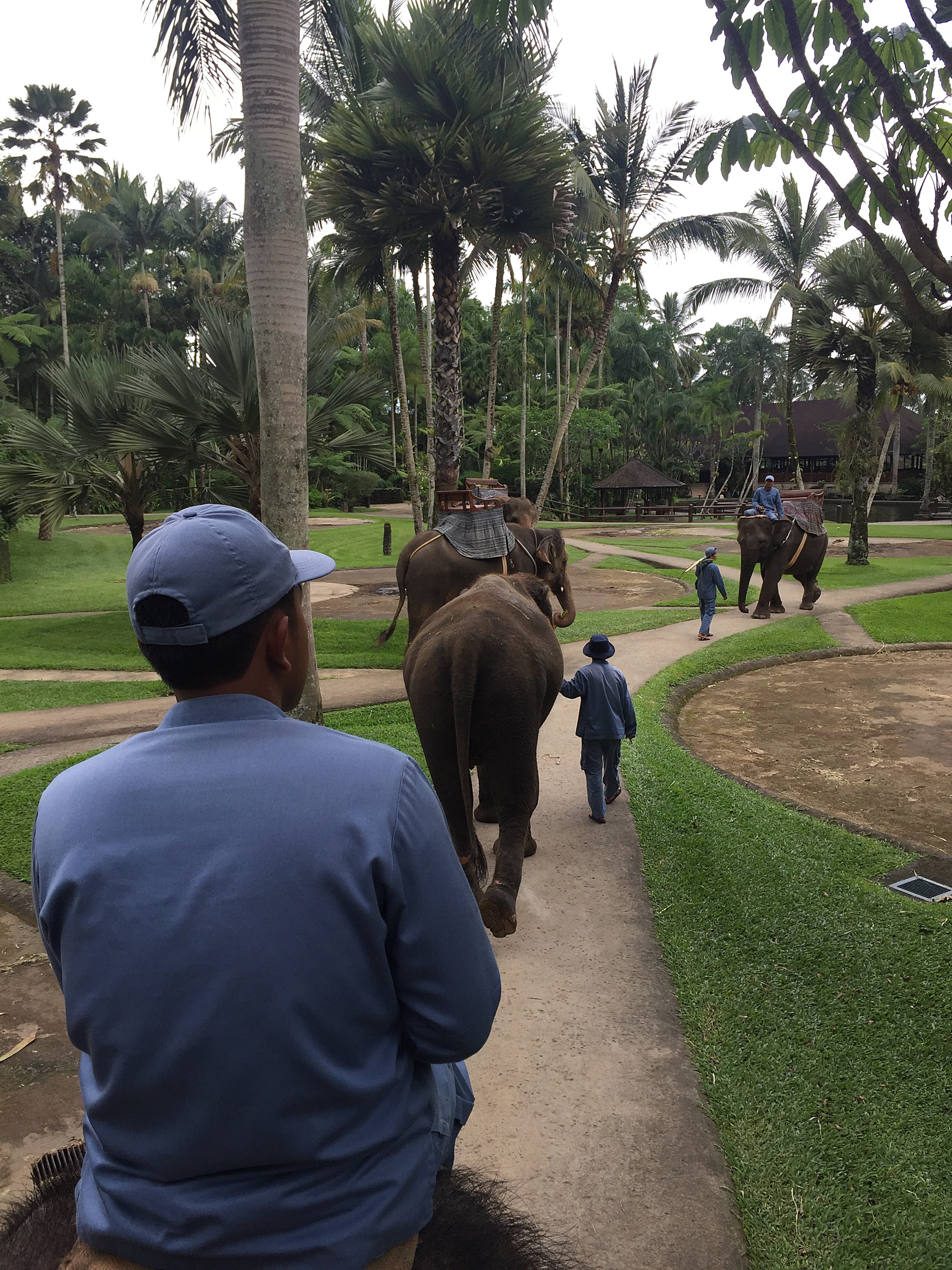 elefant-7
